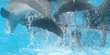 Marineland Mallorca - Dyrparken med havdyr